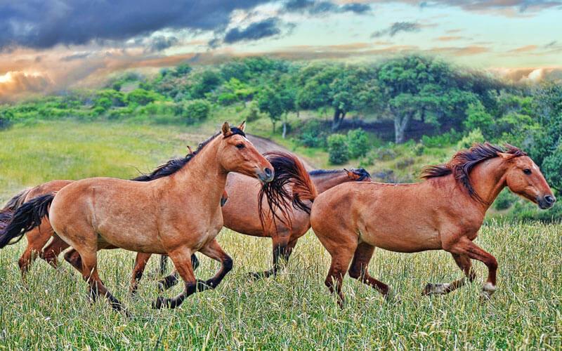 Tierkommuniation mit Mustangs