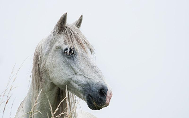Tierkommunikation mit einem Pferd