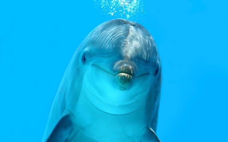 Tierkommunikation mit einem Delfin