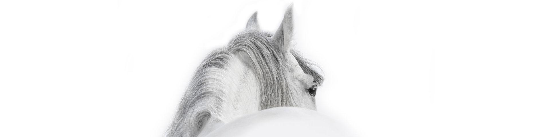Blog Tierwahrheiten