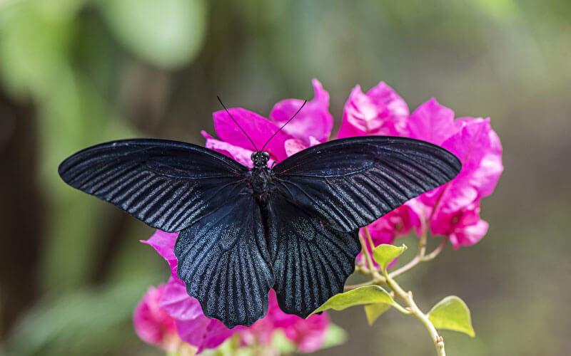 Tierkommunikation mit einem Schmetterling