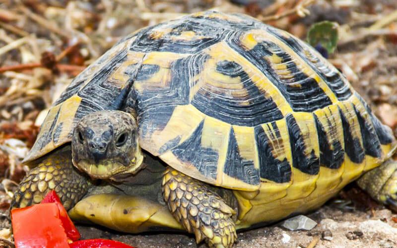 Tierkommunikation mit einer Schildkröte