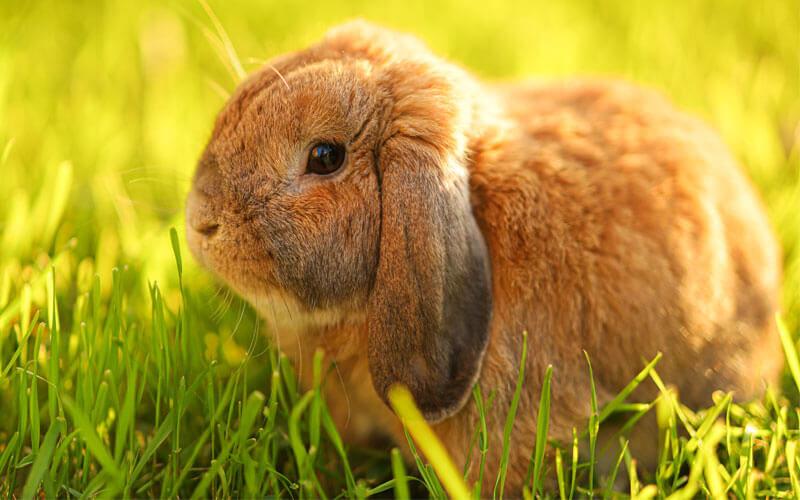 Tierkommunikation Kaninchen
