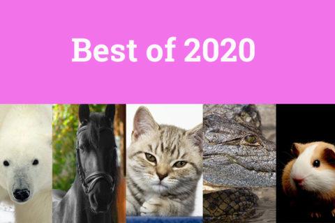Best of Tierwahrheiten 2020