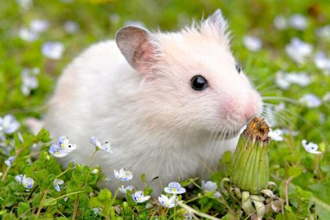 Tierkommunikation mit einem Hamster