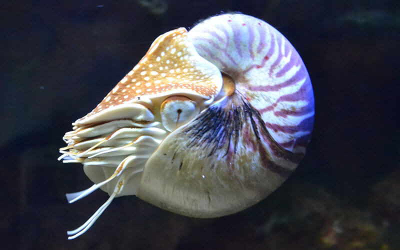 Tierkommunikation mit einem Nautilus