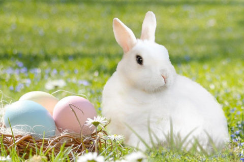 Tierkommunikation mit einem Kaninchen