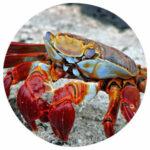 Tierkommunikation mit einer Krabbe