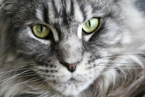Tierkommunikation mit einer Katze