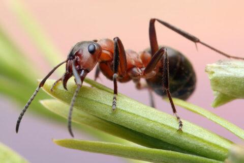 Tierkommunikation mit einer Ameise